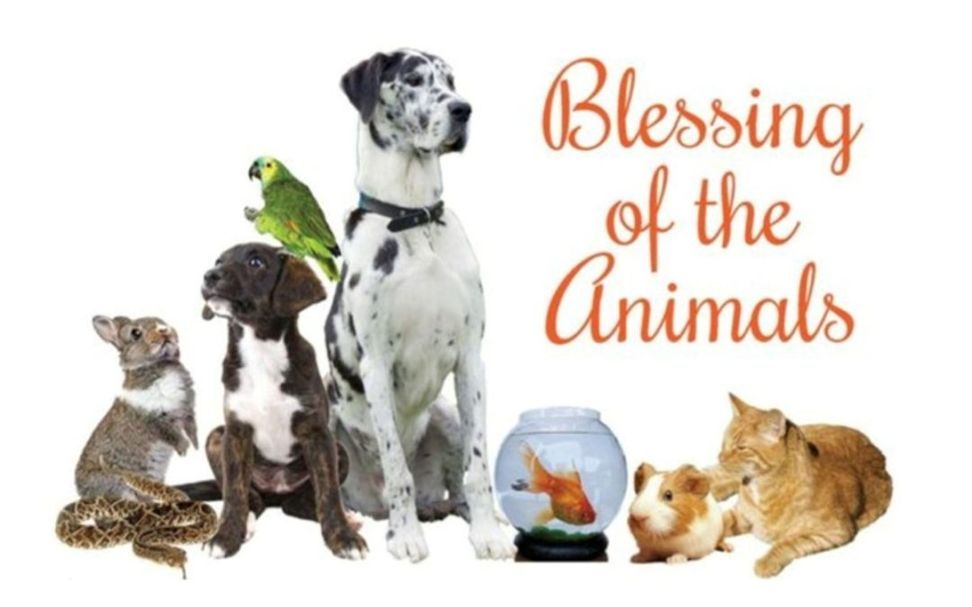 Blessing of the Animals, Sunday, October 13th at 10:45 am